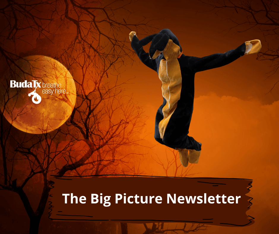 The Big Picture Newsletter (4)